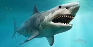 shark. Unique Shark A Computer Generated Image Of A Megalodon Shark Inside Shark S