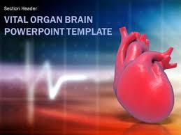 Vital Organ Heart - A Powerpoint Template From Presentermedia.com