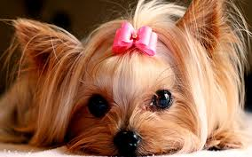 puppies images cute puppies hd wallpaper and background photos