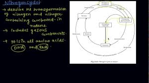The Nitrogen Cycle Class 9 Biology Natural Resources