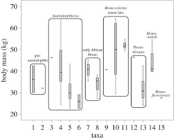 Hominin Chart The Evolution Of Body Size And Shape In The Human Career