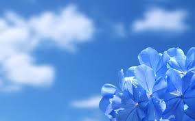 Background-Flowers-Desktop-Wallpaper ...