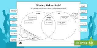 Venn Diagram Sheet Whales And Fish Venn Diagram Worksheet Worksheet Venn