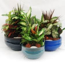 dish gardens. Shop Related Products Dish Gardens P