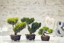 office bonsai tree. Wonderful Bonsai ArtificialPineBonsaiTreePlantGardenOfficeamp And Office Bonsai Tree L