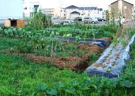 Kitchen Gardening For Beginners Triyaecom Ideas For Backyard Vegetable Garden Various Design