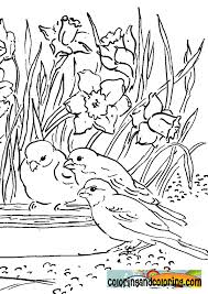Small Picture birdsandflowerscoloringpagesgif 595842 birds coloring