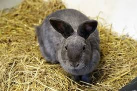 10 best hay for rabbits february 2021