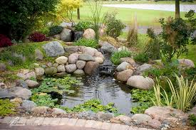 small pond and water garden kit