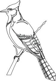 Small Picture BIRD coloring pages 81 free birds coloring pages birds