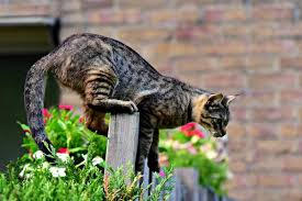 how to keep cats away from your property