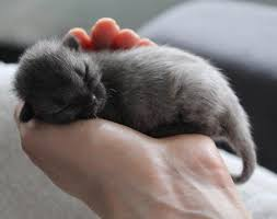 newborn gray kittens. Contemporary Gray Bruce The Cat At Facebook In Newborn Gray Kittens O