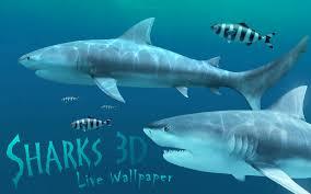 shark wallpaper 3d. Modren Shark Screenshot 1 For Sharks 3D Intended Shark Wallpaper 3d D