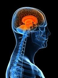 By Prezi Sahil Lutchman Neuroanatomy On