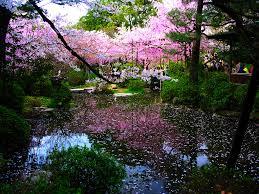 garden flowers. Japanese Garden Flowers