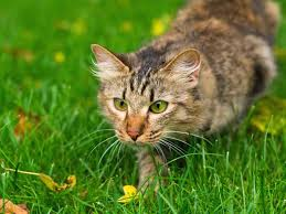 keeping cats out of garden cat deters how to keep cats out of your garden saga keeping cats out of garden how
