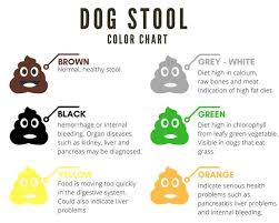 Stool Color Chart Images Dog Stool Color Chart Stool Color Chart Stool Chart Stool