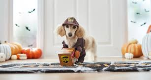 Ups Dog Costume Size Chart Funny Cute And Spooky Small Dog Costumes