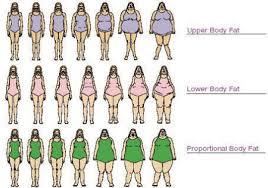Female Body Types Chart I Love Geeks Female Body Type Chart