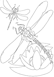 gallery of bug coloring pages to print printables and insect color
