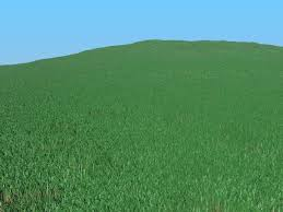 green grass field animated. FYI, This Is What It Looks Like Here, Rendered At 800x600 With A Render Time Of 42 Seconds: Green Grass Field Animated P