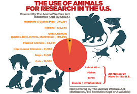 Fundamentals Research Animals Faunalytics