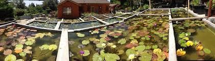 van ness water garden water gardeners