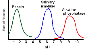 Enzyme Chart Enzyme Lab Chemistry Enzymes Biology Lab Biology