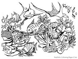 Small Picture Ocean Fish Coloring Pages Realistic Bebo Pandco