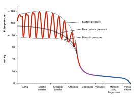 Narrow Pulse Pressure Chart Blood Flow Blood Pressure And Resistance Anatomy And