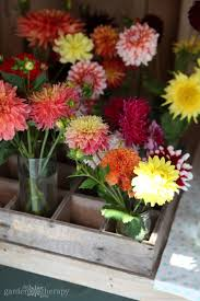 as you cut flowers from around the garden bring a mason jar or vase with a bit of water in it so you can put the stems right into the water immediately on
