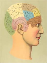 Phrenology Chart Art Print By Found Image Press Art Com