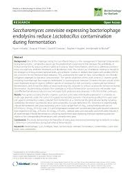 pdf saccharomyces cerevisiae expressing bacteriophage endolysins reduce lactobacillus contamination during fermentation