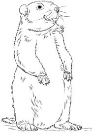 Small Picture Groundhog Standing coloring page Free Printable Coloring Pages