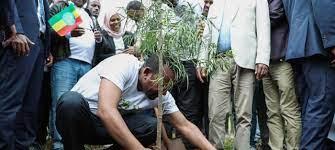 إثيوبيا تزرع أكثر من 350 مليون شجرة في يوم واحد، مسجلة رقما قياسيا عالميا  جديدا