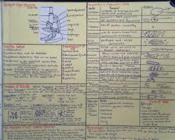 health issues essay determinants