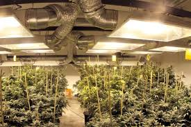 Basement Grow Room Design Cool The 48 Best Growroom Tips And Tricks From Pros High Times