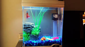 Funny Fish Tank Decorations Betta Tank Setup Cool Idea Youtube