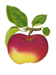apple fruit clip art. images for apple fruit clipart clip art