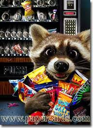 Raccoons In Vending Machine Delectable Raccoon Vending Machine Share Your Favorite Pins Pinterest