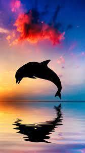 15+ Cute Dolphin Iphone Wallpaper ...