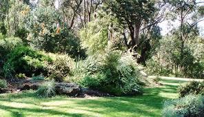 garden designs australian native plants society australia design study within bed design