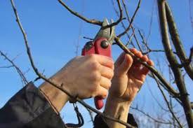 Fruit Tree Pruning Instructions  LoveToKnowDormant Fruit Trees