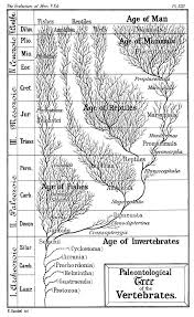 Earth Evolution Chart Timeline Of Human Evolution Wikipedia