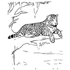Welcome to our popular coloring pages site. 10 Best Free Printable Jaguar Coloring Pages Online