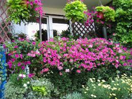 best garden plants. Best Garden Plants T