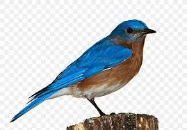 Bird Clip Art Png 960x668px Bird Beak Blue Jay