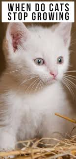 Kitten Growth Chart When Do Cats Stop Growing A Complete Kitten Growth Guide