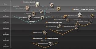 Human Evolution Natural History Museum