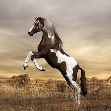 wild paint horses rearing. Brilliant Horses Awesome Rearing Wild Dark Brown Mustang Paint Stallion On Horses Pinterest